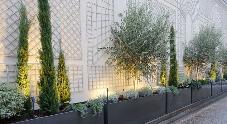 adriane m fleuriste paris bac plantes oliviers terrasses